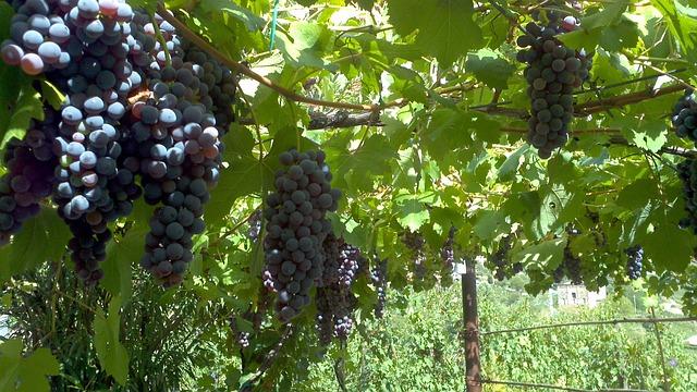 mineralidad del vino