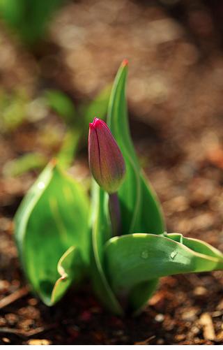 Primavera - Meritxell Falgueras