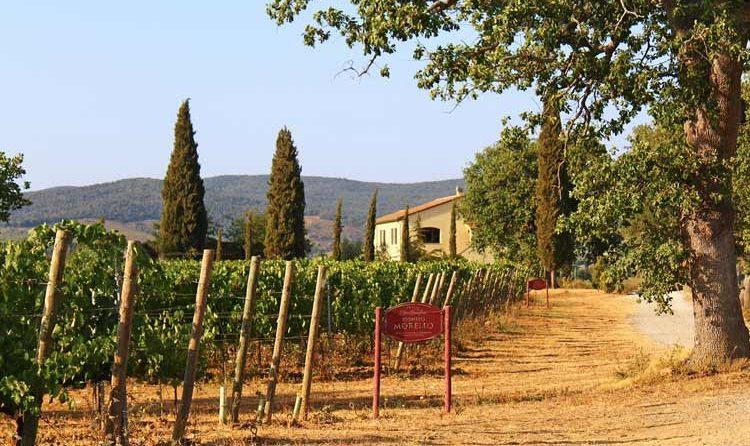 aprender de vinos italianos
