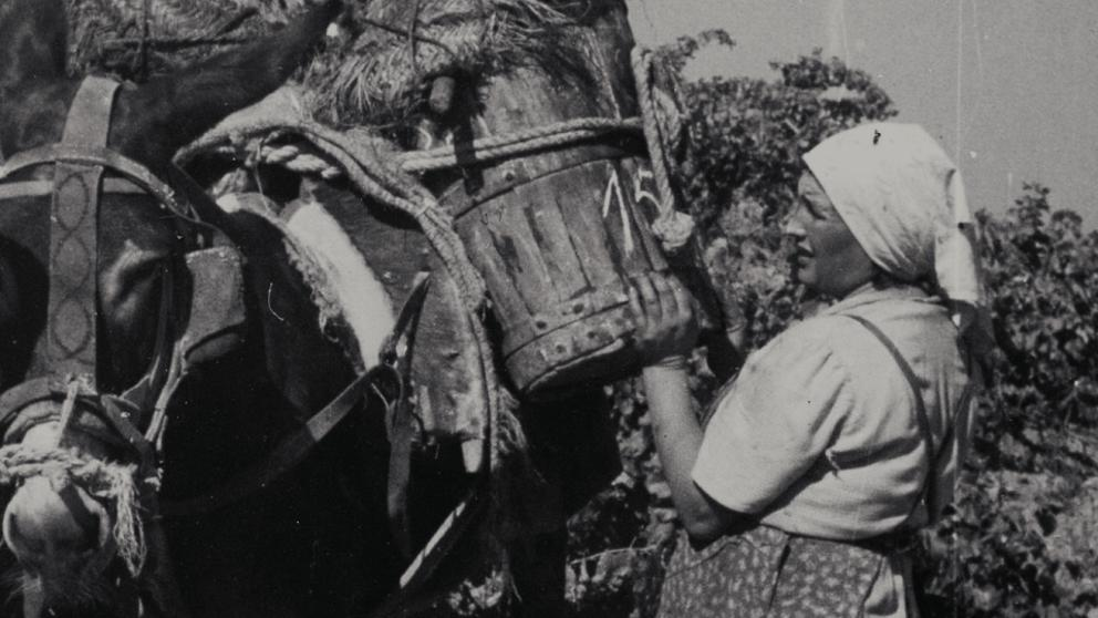Fotografia històrica de la verema al Celler Masroig